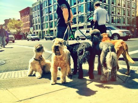 mycoop_dogwalkers